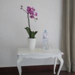 Zimmer 3 Orchidee