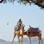 camel riding essaouira beach