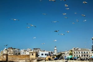 essaouira city walls sea gulls