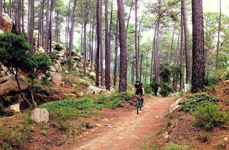 mountain biking and yoga in forest